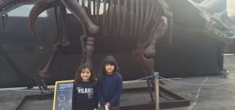 Niños, niñas y adolescentes disfrutan de exhibición de dinosaurios en Antofagasta