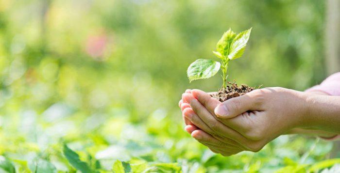 Consejo de DDHH de la ONU declara que tener un medio ambiente limpio es un derecho humano